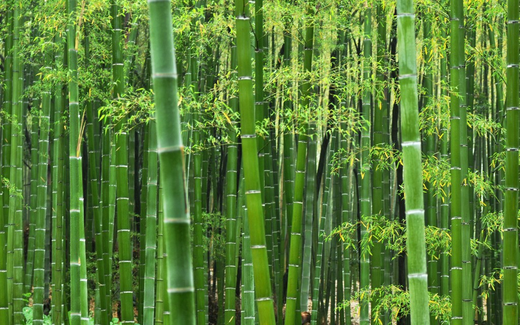 Come Visit The Bamboo Nursery