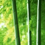 bamboo-454-2