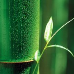 bamboo-leaf_wallpaper_1024x768_25629