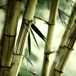 nature-bamboo_00424510